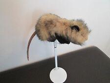 """Opposum"" - Plush Animal Stuffed (by Hansa)"