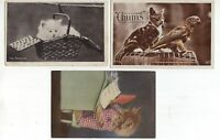 Great Britain 3 x cat postcards