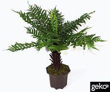 Pianta ARTIFICIALE MEDIUM 55cm comune Fern Tree realistico #N 0011