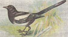 Vintage antique tobacco cigarette silk - Magpie Bird - use in crazy quilt