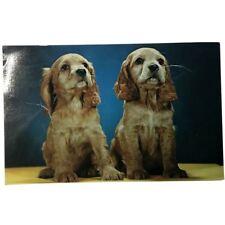 Cocker Spaniel Puppies, Ck.249, vintage postcard 1959