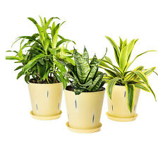 Yellow Stonewash Indoor Plants Flower Succulent Pots Planter