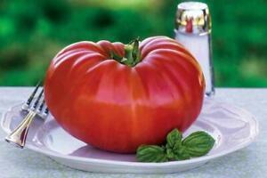 Tomato - Gigantomo F1 - 10 Finest Seeds - 1st Class