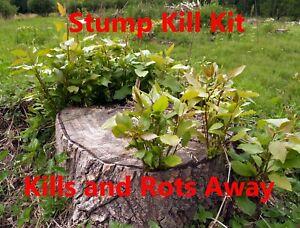 Tree Stump Killer KIT...   Kills and Rots Away Sprouting Tree Stumps