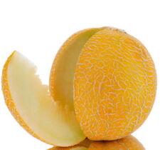 Melon seeds Honey. Extremely sweet. Ukraine heirloom Vegetable seeds
