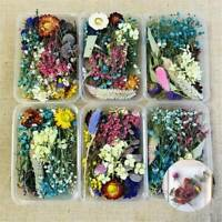 Mixed Dried Flowers DIY Epoxy UV Resin Aromatherapy Candle Craft Random 1 Box