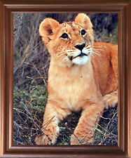 Lion Cub Big Cat Wild Animal Wall Decor Mahogany Framed Picture Art Print 18x22