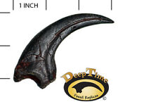 Dromaeosaurus Killing Claw- Cast Replica, Dinosaur Claw (SN2A)