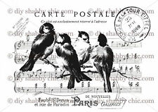 Furniture Decal Image Transfer Vintage Shabby Chic Antique Bird Postcard Upcycle