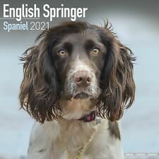 English Springer Spaniel (Euro) Calendar 2021 Premium Dog Breed Calendars