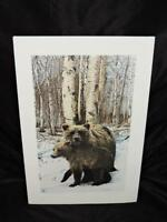 Ira Levinton Alaska Brown Bear Art Print Mother Cub A Word of Caution 1986 Signe