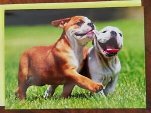 AVANTI PRESS 2 ENGLISH BULLDOGS WALKING ON THE GRASS TOGETHER ANNIVERSARY CARD