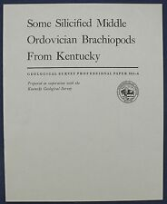 Usgs Silicified Ordovician Brachiopods from Kentucky, 1967 Truly Amazing Fossils