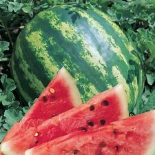 Watermelon seeds Ukraine  Berries Fruit seeds Magician
