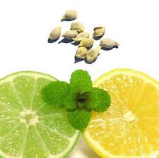 10Pcs Yellow Lemon Tree Indoor Outdoor Available Heirloom Fruit Seeds Garden