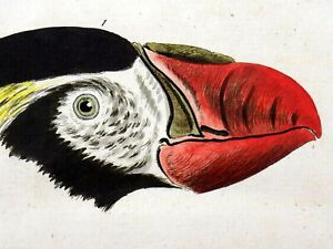 1785 John Latham - Synopsis - AUKS PUFFIN - hand coloured engraving