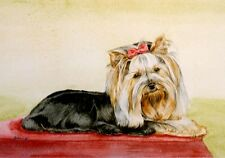 Yorkshire Terrier Yorkie Art Print by UK Artist CAH Marshall LAST ONE!