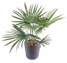 Palmier artificiel baby en piquet - fausse plante d intérieur - H. 53cm