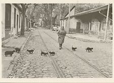 POSTCARD / CARTE POSTALE PHOTO ROBERT DOISNEAU LES CHATS DE BERCY / CAT CHAT