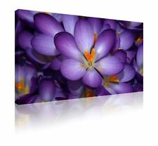 Floral & Garden Pictorial Modern Wall Hangings