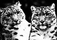 CUTE LEOPARDS ANIMALS WILD A3 ART PRINT POSTER YF5134