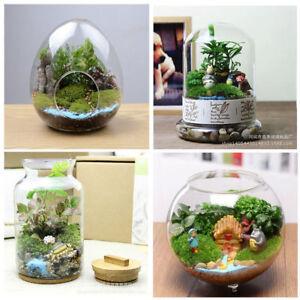 ONLY Vase Flower Hanging Glass Planter Plant Terrarium Container Home Decor