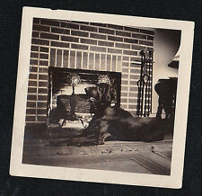 Old Vintage Antique Photograph Adorable Black Dog in Front of Brick Fireplace