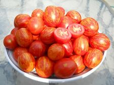 Russian Queen Tomato Seeds- Rare Russian Heirloom Variety- Organic- 40+ Seeds