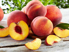 12 Nemaguard Peach Tree Seeds Prunus Nemaguard Sweet Peaches Home Orchard Fruit