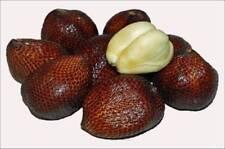 Salacca edulis 'Pondoh' , Salak-Palme, Salac Palm, Snakefruit, 5 Samen