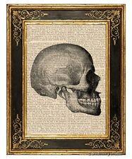Skull #2 Art Print on VintageBook Page Medical Anatomy Illustration Home Decor