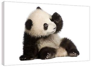 Panda Bear Cub Canvas Wall Art Picture Print