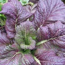 Vegetal amsoi - INDIO mostaza rojo 10 Gramos Aprox 5000 Semillas A GRANEL