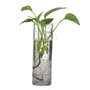 2pcs Hanging Terrarium Flower Air Plant Planter Glass Vase Garden Wall Decor