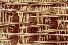 645001 Piojo posterior A4 Foto Textura impresión