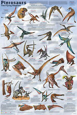 Pterosaurs Dinosauer Educational Science Classroom Chart Print Poster 24x36