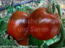 Blue POMODORO NERO 10 semi freschi Tomaten BLU balcone kübe