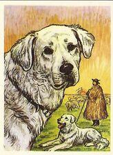 Scarce 1952 Dog Art Print Austria Tobacco Bildwerk Company Card Hungarian Kuvasz