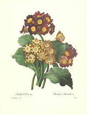 REDOUTE Botanical LAMBS EARS VAR Vintage Art Print #111 NOT A COLOR COPY!!