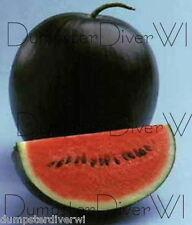 Sugar Baby Heirloom WATERMELON 30+ seed super sweet fast harvest Organic NON-GMO