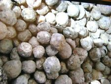 Geodes for breaking 1-1 3/4 inch Chihuahua Mexico 5 pound lots