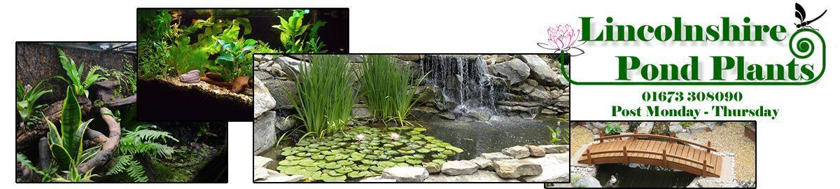 Lincolnshire Pond Plants