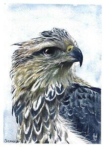 original painting A5 9ShAl art by samovar watercolor modern animal bird hawk