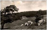 Schullandheim Luginsland bei Freiburg Breisgau AK 1958 gelaufen Kühe Weide Wald