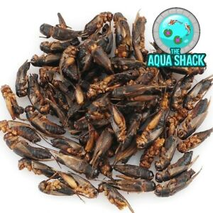 Natural Dried Crickets - Treats for Rats, Sugar Gliders, Pygmy Hedgehogs, Birds