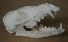 Fox Animal Skull Replica Taxidermy Study Prop Ornament Halloween Decoration