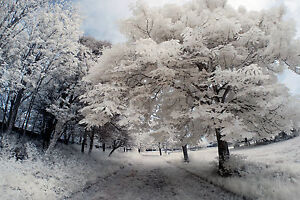 Nikon D80 Infrared converted 720nm IR Camera Body only Standard Infrared IR.