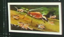 #7 - most prolific animal - aphid card