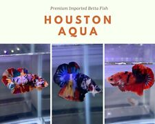 """""""WHOLESALE PRICE"""" Live Male Betta Fish Halfmoon Plakat Grade A+(LIMIT TIME ONLY)"""