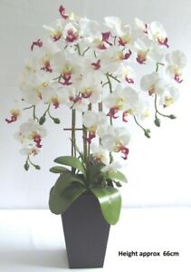 Large Artificial White / Pink Orchid Plant in Pot - 66cm